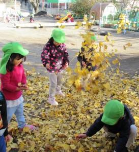 いちょうの葉っぱ投げ上げる