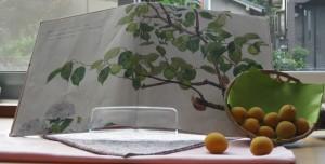 絵本と梅の実