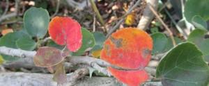 ゆなの木の葉 紅葉