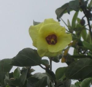 開花ゆなの木