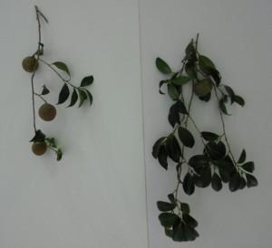 木の実 1