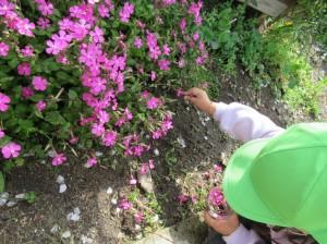 花摘み 3